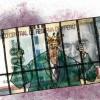 El efectivo sigue siendo el rey, por Carolina Trivelli